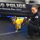 Eddie the honorary police dog with Detective Julie Lee (Pasco Police)
