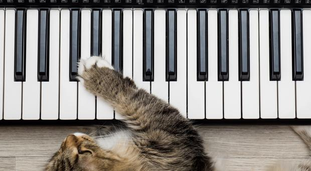 Cats on a keyboard.