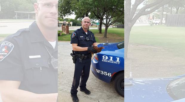 Why did the chicken… you know the rest (Arlington Police, Texas)