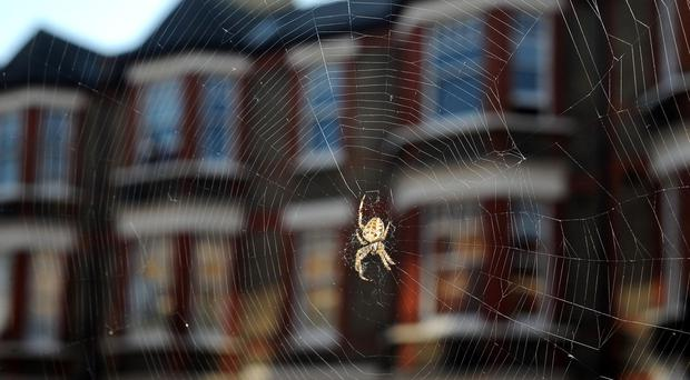 A spider sitting in the centre of a web in London