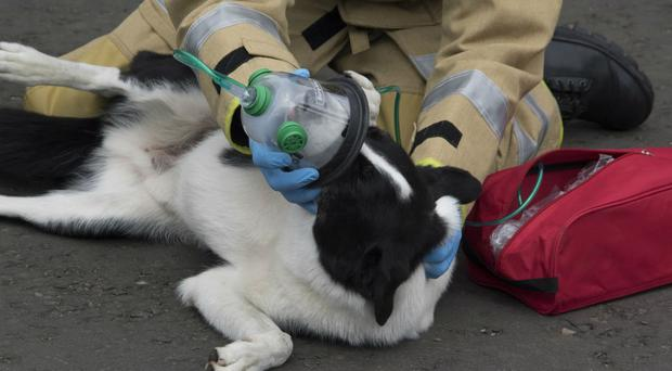 A dog is given air via an oxygen mask thanks to charity Smokey Paws (Smokey Paws/Merseyside Fire and Rescue Service)