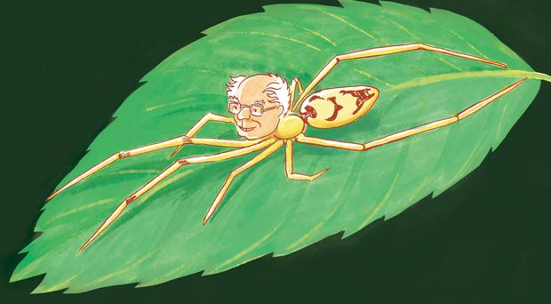 Students have named a spider species after Bernie Sanders (Glynnis Fawkes/PA)