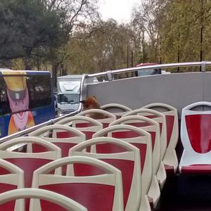 A fox on a bus