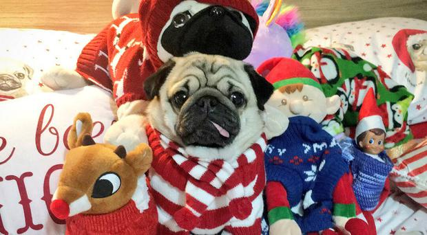 Dog in a Christmas Jumper