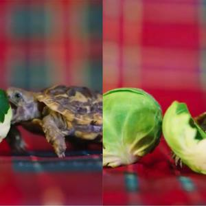 Finn eating a sprout
