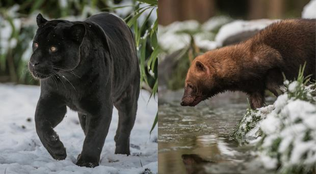 Animals in the snow