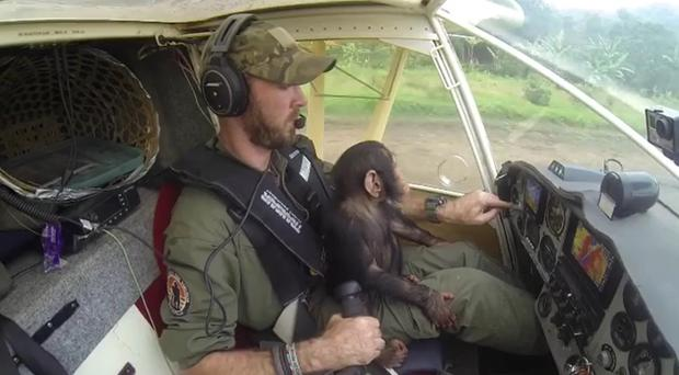 Mussa the chimp gets flown to the rehabilitation centre (@anthonycaere/PA)