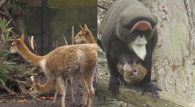 Zoo animals get Mother's Day treats (Twycross Zoo/PA)