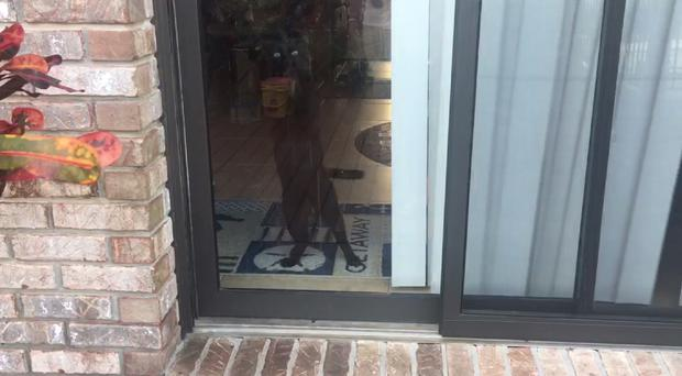 A cat greets his owner enthusiastically