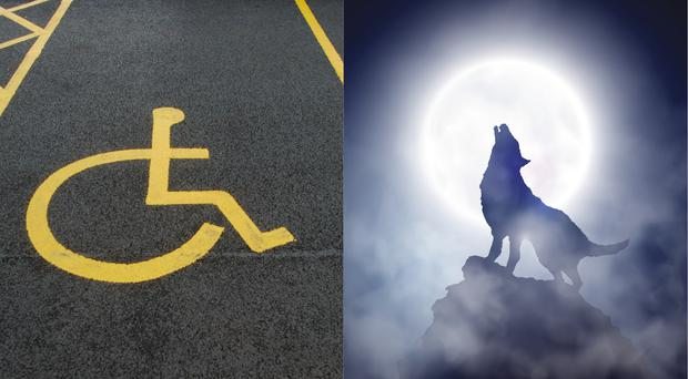 Disabled parking space and a werewolf
