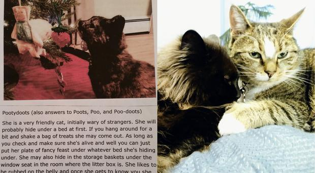 A cat bio and two cats