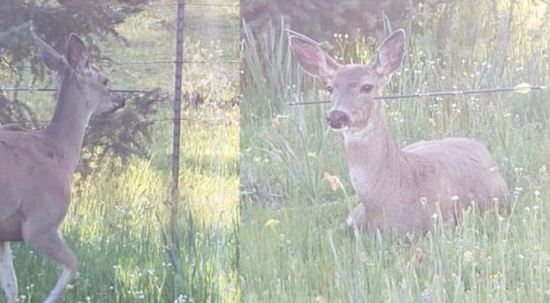 A deer with an arrow through its head (Oregon State Police/PA)