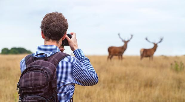 Person taking photos of deer