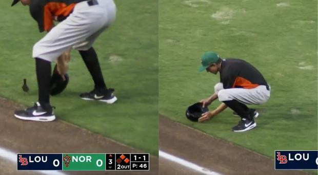 A duck is taken off the field at a baseball game