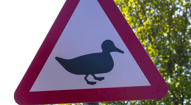 Duck road crossing sign (Northcam/Getty Images)