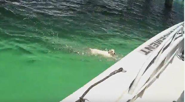 Dog rescued from water off the coast of Florida (Okaloosa County Sheriff's Office)