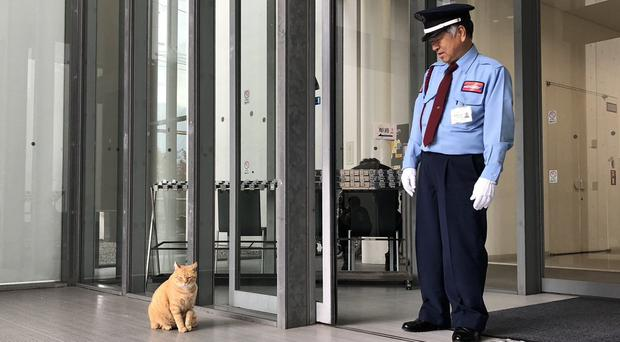A security guard at the museum in Hiroshima watches over a local ginger cat by the museum door (bijutsu1 on Twitter/PA)