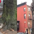 Two squirrels fighting in Brooklyn, New York City (@SamGrittner)
