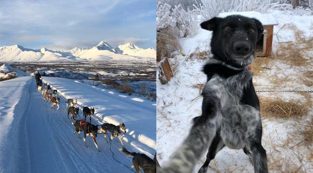 Blair Braverman's sled dogs run in front of the mountains (Blair Braverman)