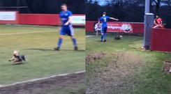A dog runs around on the pitch during Tunbridge Wells' game against Chatham Town (Simon Crockford)