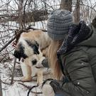 A St Bernard called Old Lady is rescued after spending 17 days alone in Minnesota (Ruff Start Rescue)