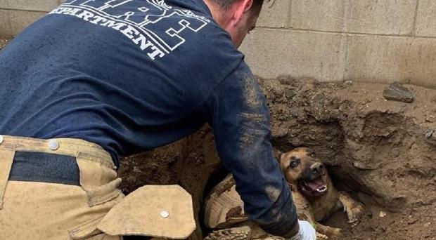 Firefighters managed to 'un-wedge' the animals in about 10 minutes (San Bernardino County Fire District)