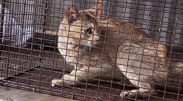 The cat was trapped in a 40-foot shipping container for the duration of the three-week voyage (BC SPCA)