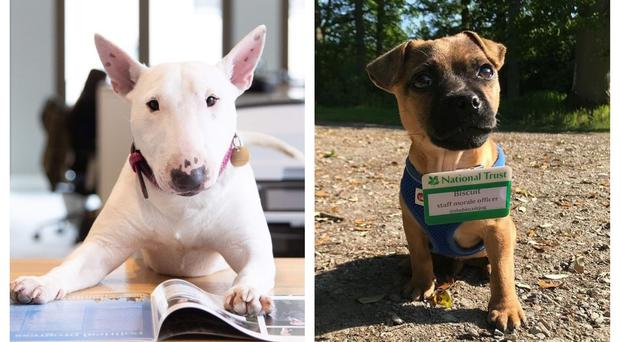 Dogs have been visiting places of work up and down the country (Kennel Club/National Trust)