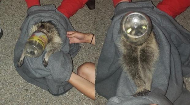 The raccoon was freed from the jar by police (Bellevue Police/PA)
