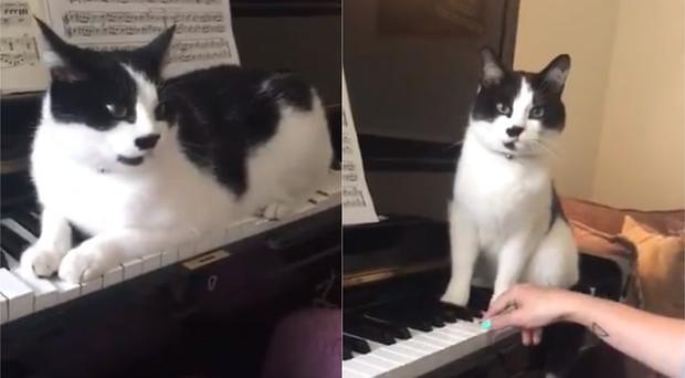 Jasper the cat sitting on the piano (Laura Elliott)