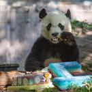 Bei Bei the panda enjoys a frozen birthday cake (Smithsonian's National Zoo/PA)