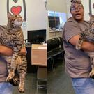 The cat weighs in at 26 pounds according to the refuge (Morris Animal Refuge)