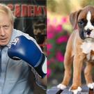 Boris Johnson and a dog (Stefan Rousseau/PA/JLSnader/Getty)