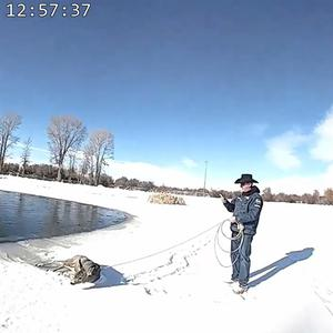 A deer saved by a deputy with a lasso (Sublette County Sheriff's Office/PA)