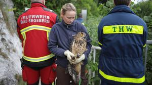 A member of a voluntary fire brigade holds a young owl after the rescue of the animal from the bottom of an old well (Freiwillge Feuerwehr Bad Segeberg via AP)