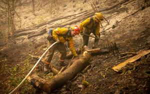 Firefighters work on mopping up a back burn near Leaburg, Oregon (Andy Nelson/The Register-Guard/AP)
