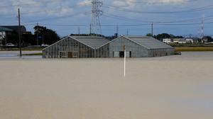 Greenhouses submerged in floodwater from the swollen Kinugawa River in Joso. (AP)