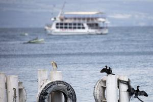 Birds rest on as an empty tourist ship anchored in the Sea of Galilee (Ariel Schalit/AP)
