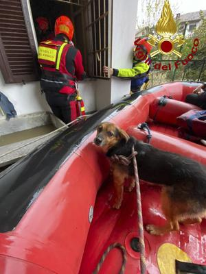 An evacuated dog sits in a dinghy as firefighters evacuate a house in Carde', near Cuneo, in the Piedmont region of northern Italy, after floods, Sunday, Nov. 24, 2019. Heavy rains and bad weather have been hitting most of Italy, causing river areas to overflood and isolate hamlets. (Italian Firefighters Vigili del Fuoco via AP)