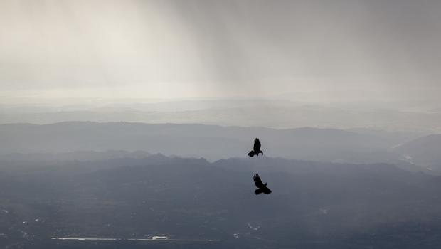 Crows fly as dark streaks of rain fall over Kangra Valley in Dharmsala, India,(Ashwini Bhatia/AP))