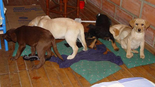Puppies rescued from a farm in Colombia