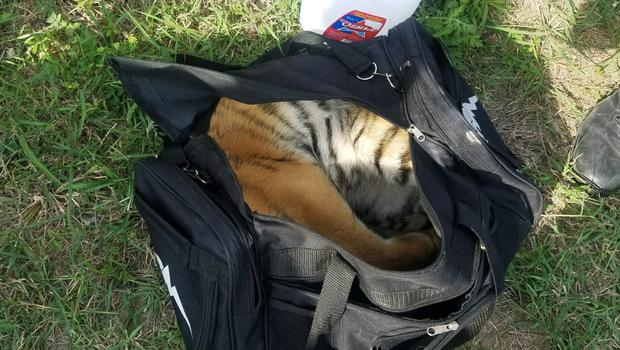 The tiger cub in a bag (US Customs and Border Protection/AP)