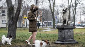 A woman walks with her dogs past the statue of the stray dog Zorik, warming up a kitten, is placed in front of a shopping center in Tallinn, Estonia, Wednesday, Dec. 16, 2020. The statue is meant as a tribute both to Zorik and his animal companions, and to all strays. Zorik once had a dog companion who was killed in a car accident. He then took up with stray cats and was seen with them often, even while sleeping. (AP Photo/Raul Mee)