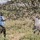 Men surrounded by a swarm of desert locusts in Kenya (Patrick Ngugi/AP)