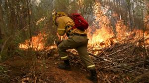 A firefighter digs a trench in an effort to stop the advancement of a wildfire (AP)