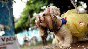 Cleo, dressed in a Snow White costume during the annual dog Carnival parade in Rio de Janeiro (AP)