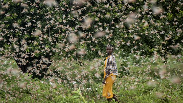 The UN has allocated 10 million dollars for aerial spraying (Ben Curtis/AP)