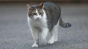 Authorities in the US say two cats have tested positive to the coronavirus, but there is no sign pets are transmitting Covid-19 to humans (Aaron Chown/PA)