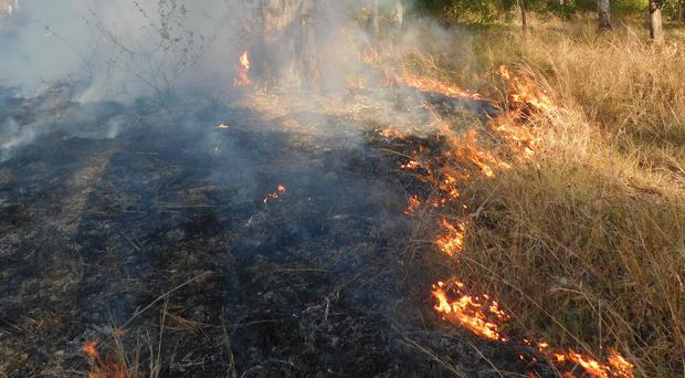 Cultural burning of the land (Firesticks Alliance Indigenous Corporation)