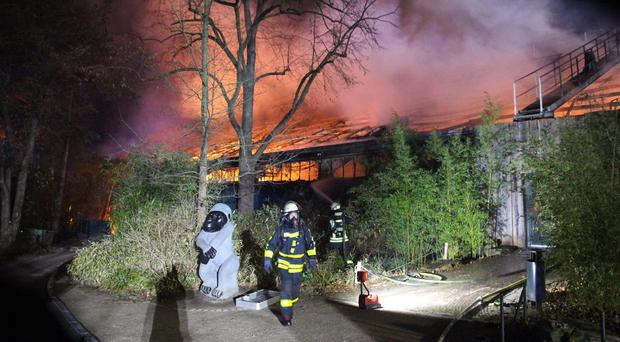 Firefighters in front of the burning monkey house at Krefeld Zoo in Krefeld, Germany (Alexander Forstreuter/dpa/AP)